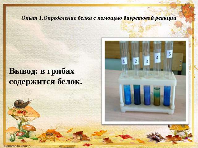 Опыт 1.Определение белка с помощью биуретовой реакции Вывод: в грибах содерж...