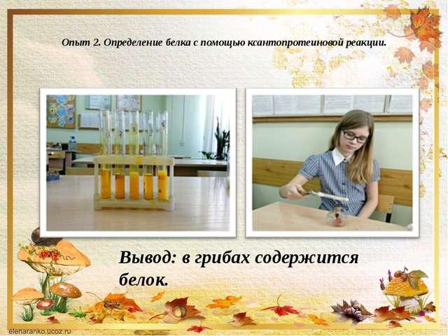 Опыт 2. Определение белка с помощью ксантопротеиновой реакции. Вывод: в гриб...