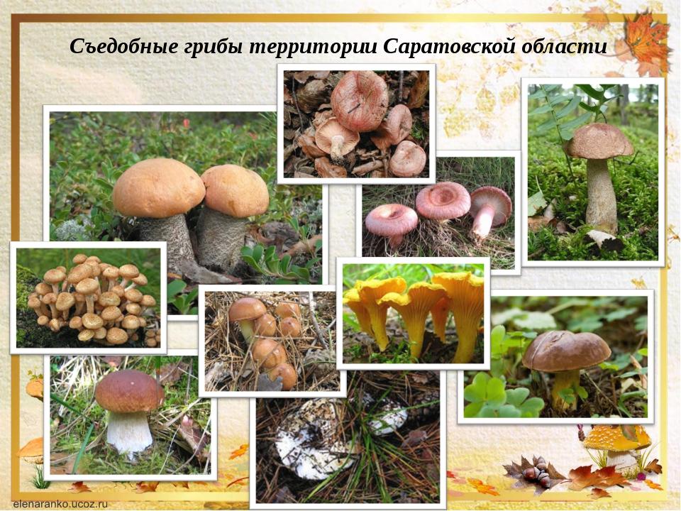 съедобные грибы урала фото с названиями и описанием второе глубине место
