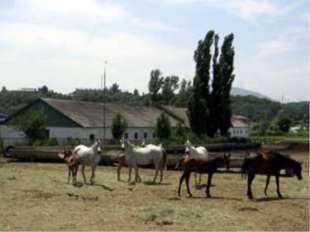 Терский конный завод №169
