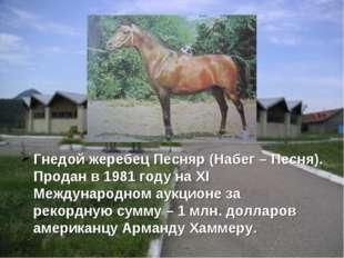 Гнедой жеребец Песняр (Набег – Песня). Продан в 1981 году на XI Международном