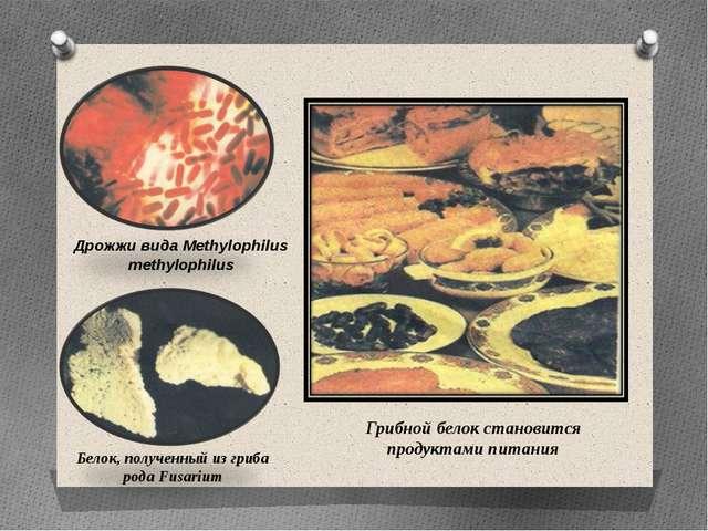 Дрожжи вида Methylophilus methylophilus Белок, полученный из гриба рода Fusar...