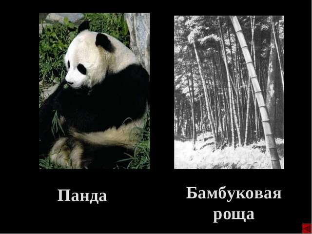 Панда Бамбуковая роща