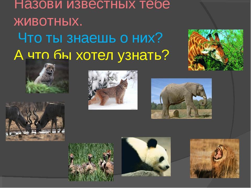 Назови известных тебе животных. Что ты знаешь о них? А что бы хотел узнать?