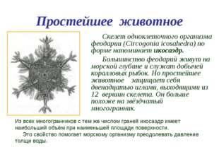 Простейшее животное Скелет одноклеточного организма феодарии (Circogonia icos