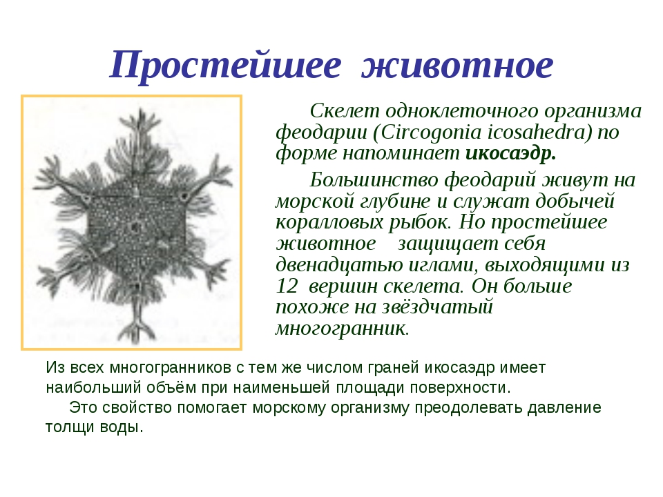 Простейшее животное Скелет одноклеточного организма феодарии (Circogonia icos...