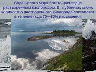 Вода Белого моря богато насыщена растворенным кислородом. Вглубинных слоях к