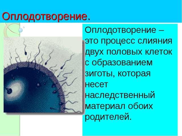 Оплодотворение. Оплодотворение – это процесс слияния двух половых клеток с об...