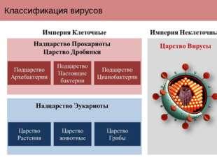 Классификация вирусов Вирусы в настоящее время выделены в отдельную империю н