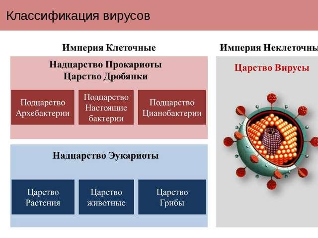 Классификация вирусов Вирусы в настоящее время выделены в отдельную империю н...
