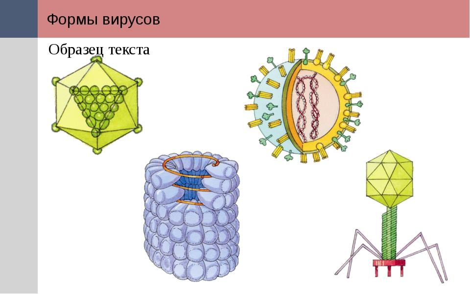 Формы вирусов Форма вирусов разнообразна: многогранная в виде икосаэдра (виру...