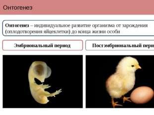 Онтогенез Онтогенез – индивидуальное развитие организма от зарождения (оплодо