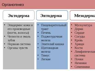 Органогенез Эпидермис кожи и его производные (ногти, волосы) Челюсти и эмаль