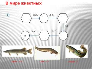 Сом Сом – самый крупный представитель вида речных рыб. Его длина может дост
