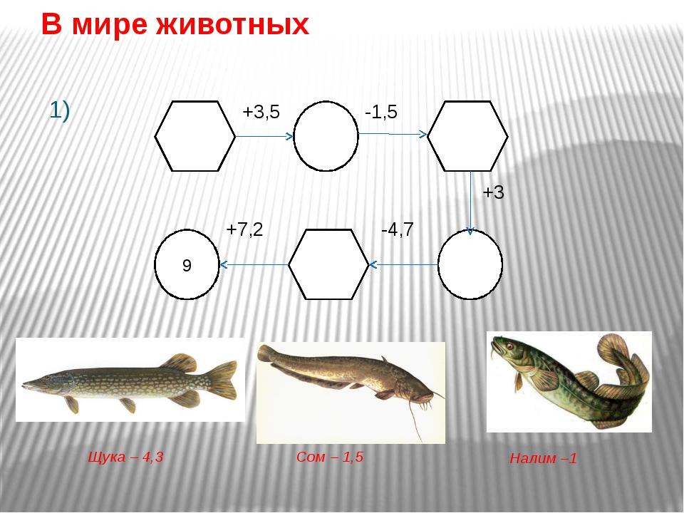 Сом Сом – самый крупный представитель вида речных рыб. Его длина может дост...