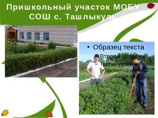 Пришкольный участок МОБУ СОШ с. Ташлыкуль