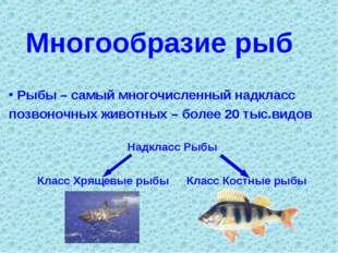 Многообразие рыб Рыбы – самый многочисленный надкласс позвоночных животных –