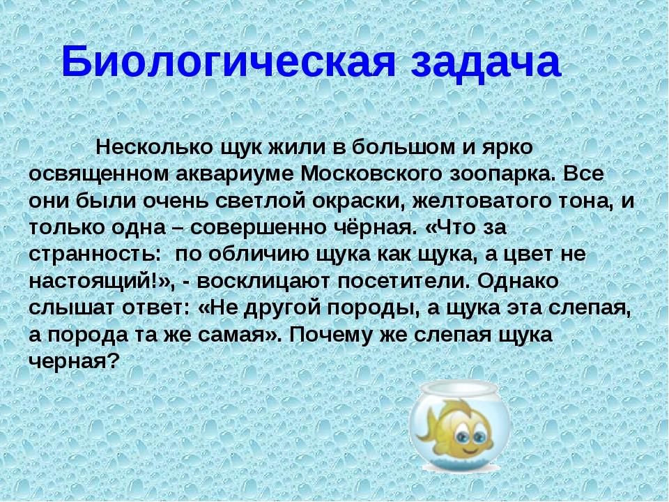 Несколько щук жили в большом и ярко освященном аквариуме Московского зоопар...