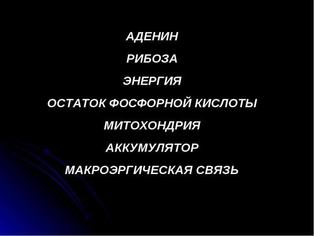 АДЕНИН РИБОЗА ЭНЕРГИЯ ОСТАТОК ФОСФОРНОЙ КИСЛОТЫ МИТОХОНДРИЯ АККУМУЛЯТОР МАКРО...