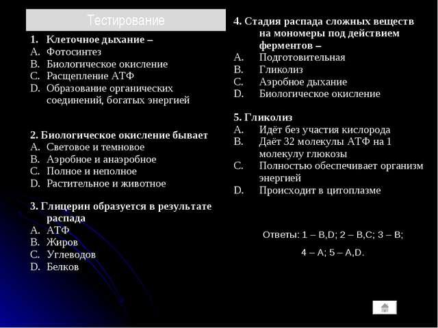 Ответы: 1 – B,D; 2 – B,C; 3 – B; 4 – A; 5 – A,D. Тестирование Клеточное дыхан...