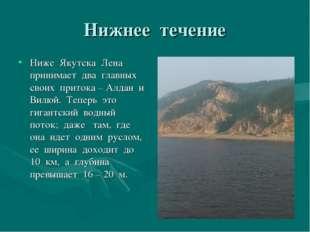 Нижнее течение Ниже Якутска Лена принимает два главных своих притока – Алдан