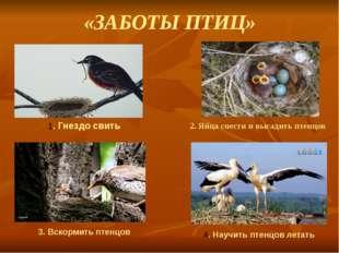 «ЗАБОТЫ ПТИЦ» 2. Яйца снести и высадить птенцов 1. Гнездо свить 3. Вскормить