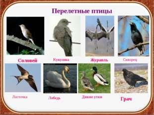 Перелетные птицы Грач Журавль Соловей Кукушка Скворец Ласточка Лебедь Дикие