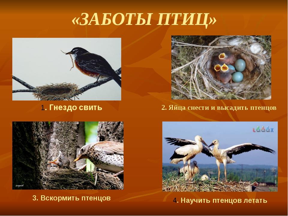 «ЗАБОТЫ ПТИЦ» 2. Яйца снести и высадить птенцов 1. Гнездо свить 3. Вскормить...