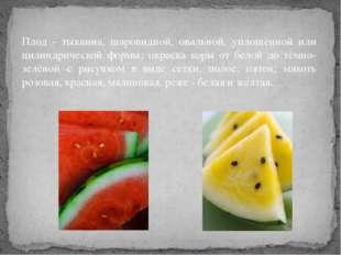Плод - тыквина, шаровидной, овальной, уплощённой или цилиндрической формы; ок