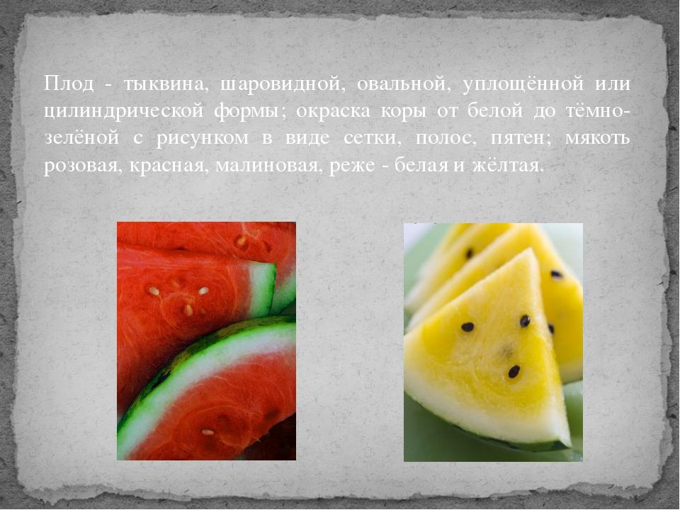 Плод - тыквина, шаровидной, овальной, уплощённой или цилиндрической формы; ок...