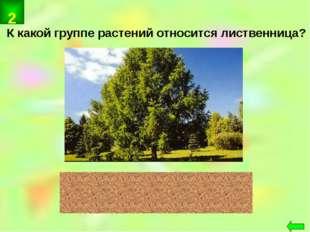 К какой группе растений относится лиственница? хвойные 2