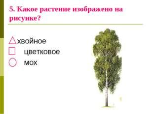 5. Какое растение изображено на рисунке? хвойное цветковое мох