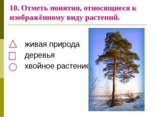 10. Отметь понятия, относящиеся к изображённому виду растений. живая природа