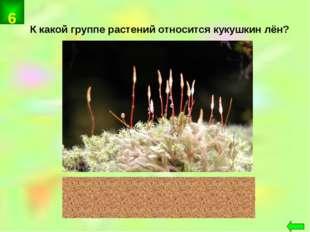 К какой группе растений относится кукушкин лён? мхи 6