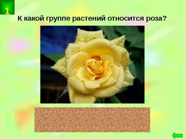 К какой группе растений относится роза? цветковые 1