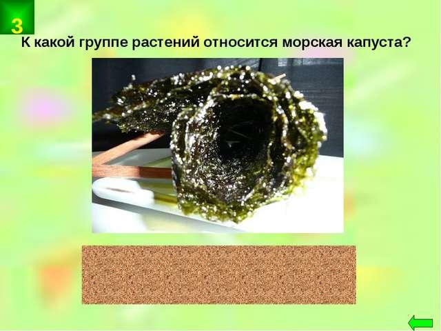 К какой группе растений относится морская капуста? водоросли 3