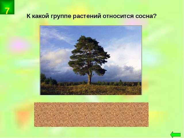 К какой группе растений относится сосна? хвойные 7