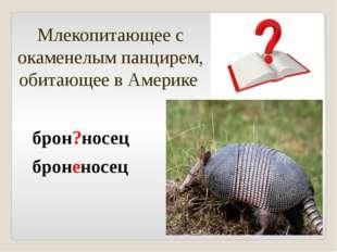 Млекопитающее с окаменелым панцирем, обитающее в Америке брон?носец броненосец
