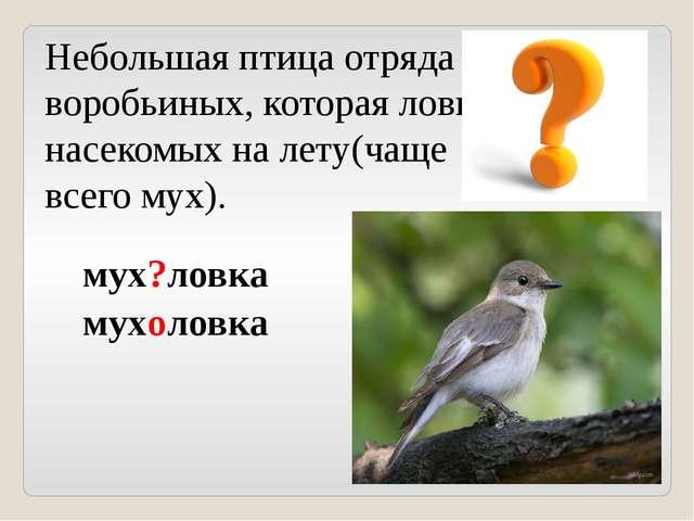 Небольшая птица отряда воробьиных, которая ловит насекомых на лету(чаще всего...