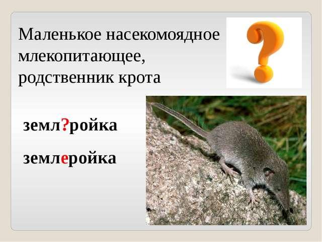 Маленькое насекомоядное млекопитающее, родственник крота земл?ройка землеройка