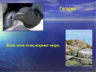 Гагарка Всех этих птиц кормит море.