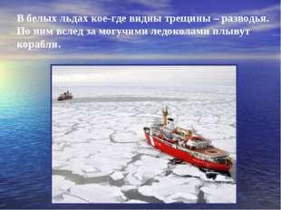 В белых льдах кое-где видны трещины – разводья. По ним вслед за могучими ледо