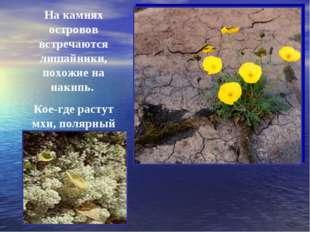 На камнях островов встречаются лишайники, похожие на накипь. Кое-где растут м