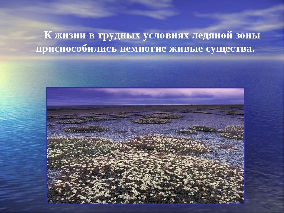 К жизни в трудных условиях ледяной зоны приспособились немногие живые сущест...