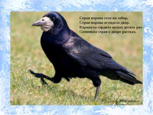 Серая ворона села на забор, Серая ворона оглядела двор. Каркнула сердито целы