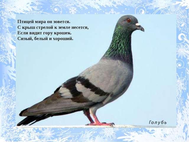 Птицей мира он зовется. С крыш стрелой к земле несется, Если видит гору кроше...