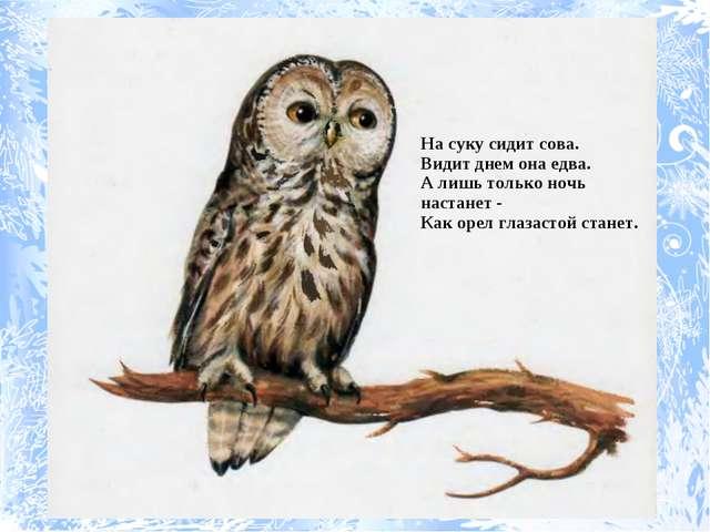 На суку сидит сова. Видит днем она едва. А лишь только ночь настанет - Как о...