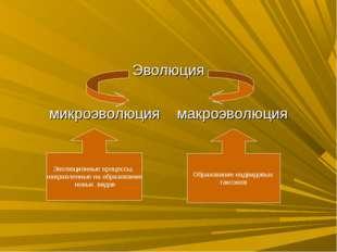 Эволюция микроэволюция макроэволюция Эволюционные процессы, направленные на о