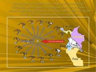 Рассмотрите изображённые на рисунке клювы птиц – нектарниц, орехоядных, зерно