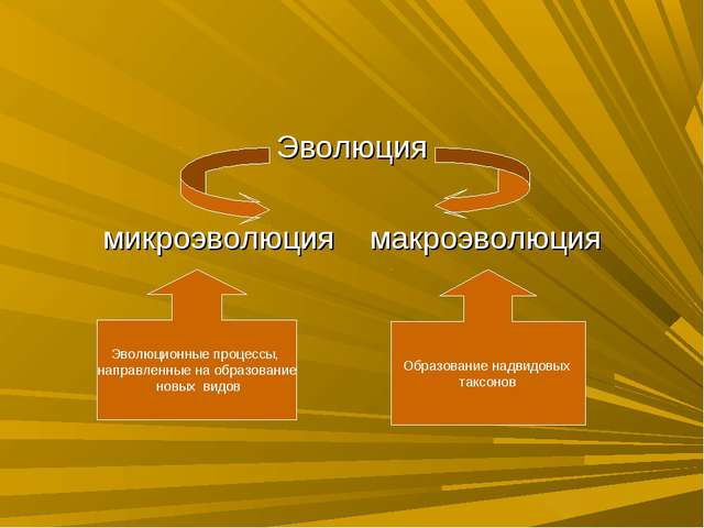 Эволюция микроэволюция макроэволюция Эволюционные процессы, направленные на о...